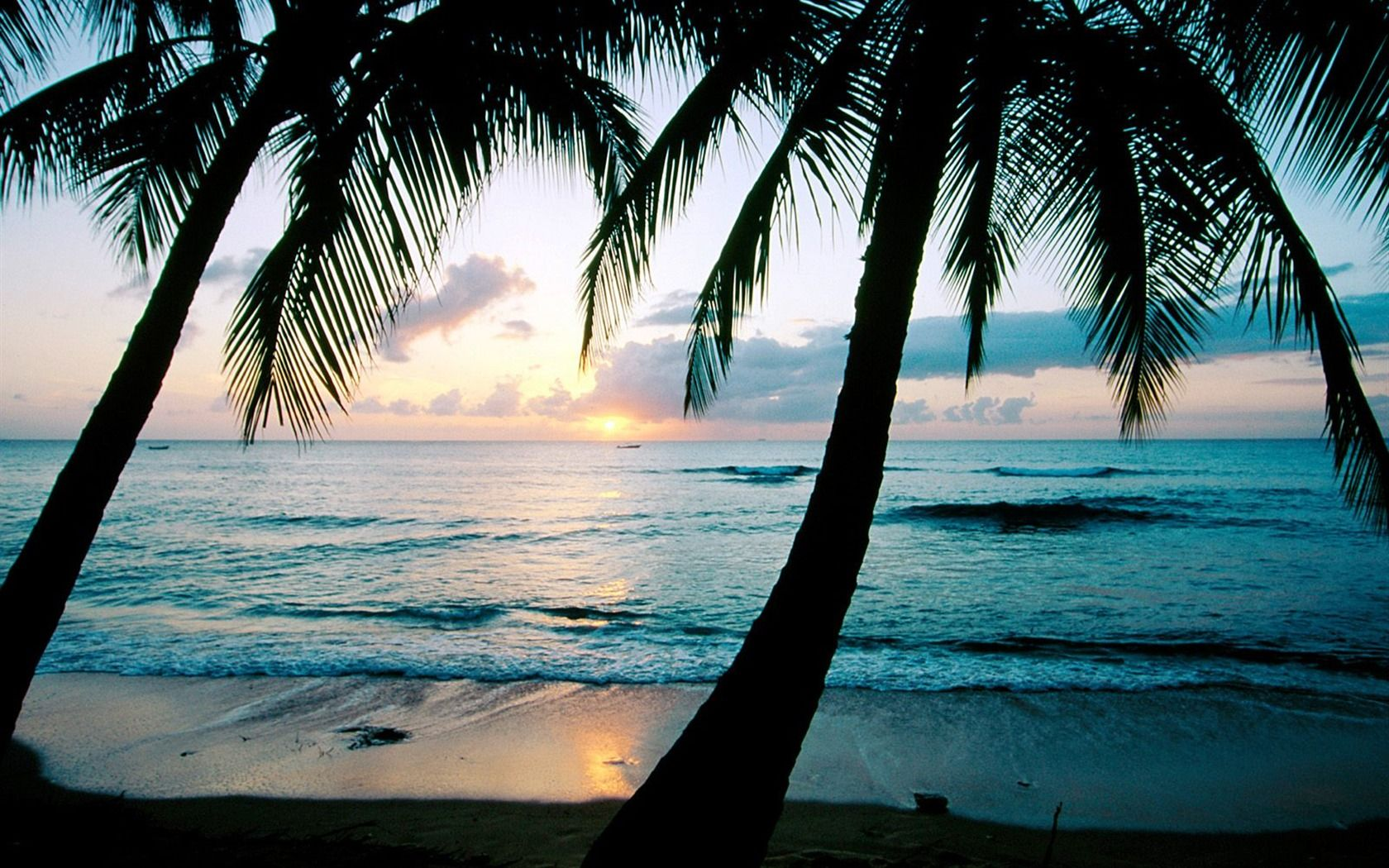 Wallpaper palm tree android apps on google play 1680 1050 pictures of palm trees wallpapers 40 - Palm tree wallpaper for android ...
