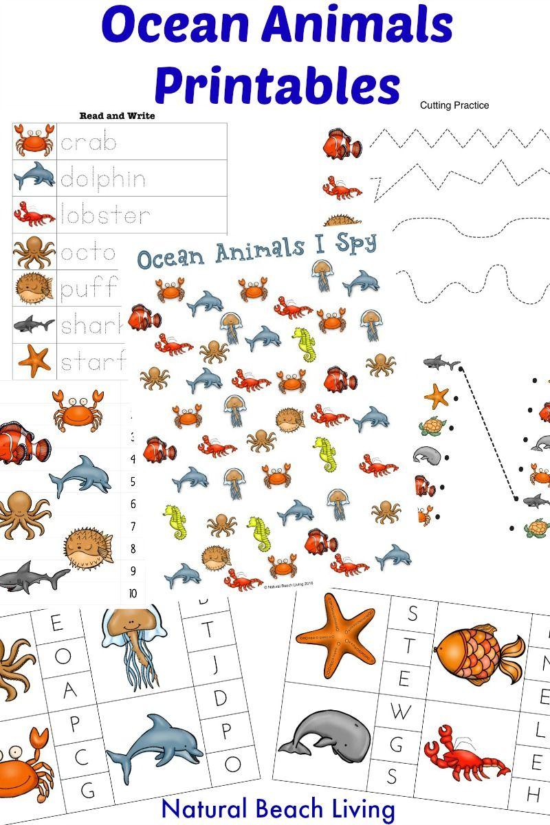 The Best Ocean Animals Preschool Activities Preschool Themes