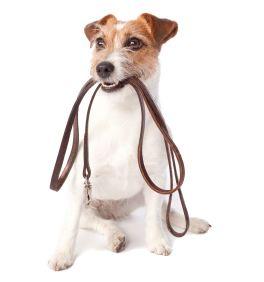 ¿Cómo pasear a mi perro sin problemas? https://theyellowpet.blog/pasear-perro-problemas/