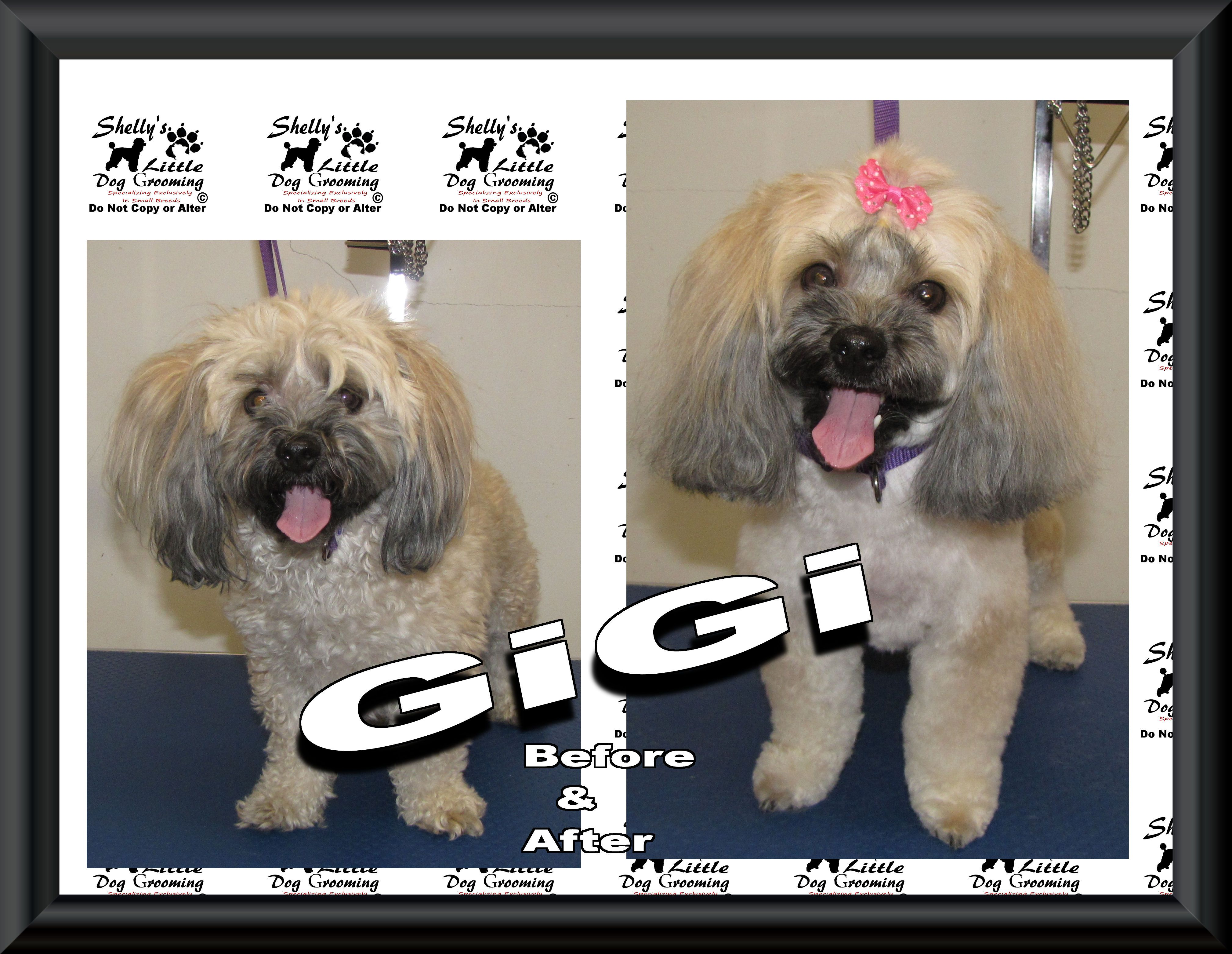 A Big Welcome To Gigi Her 1st Time Here And A Little Joy To