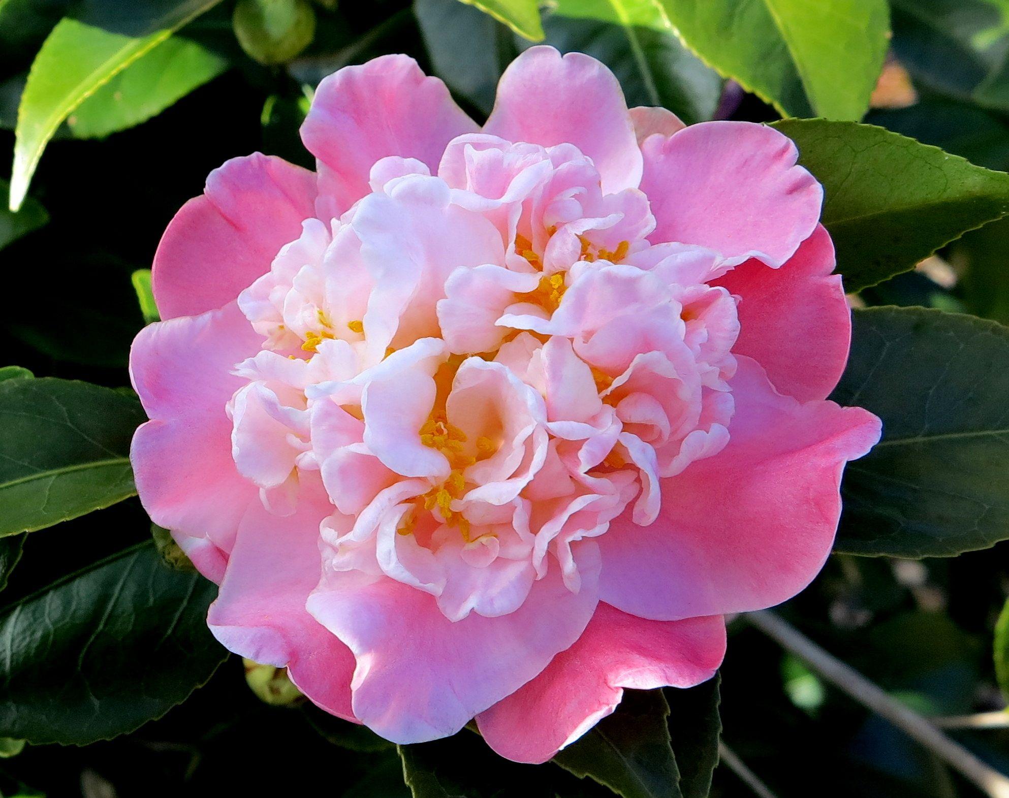 Zelda Fitzgerald Artificial Flowers Camellia Plant Flowers