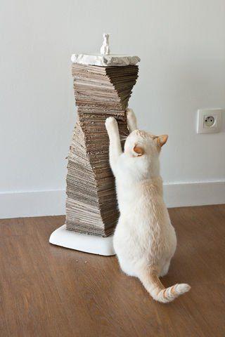 Warum Kratzen Katzen