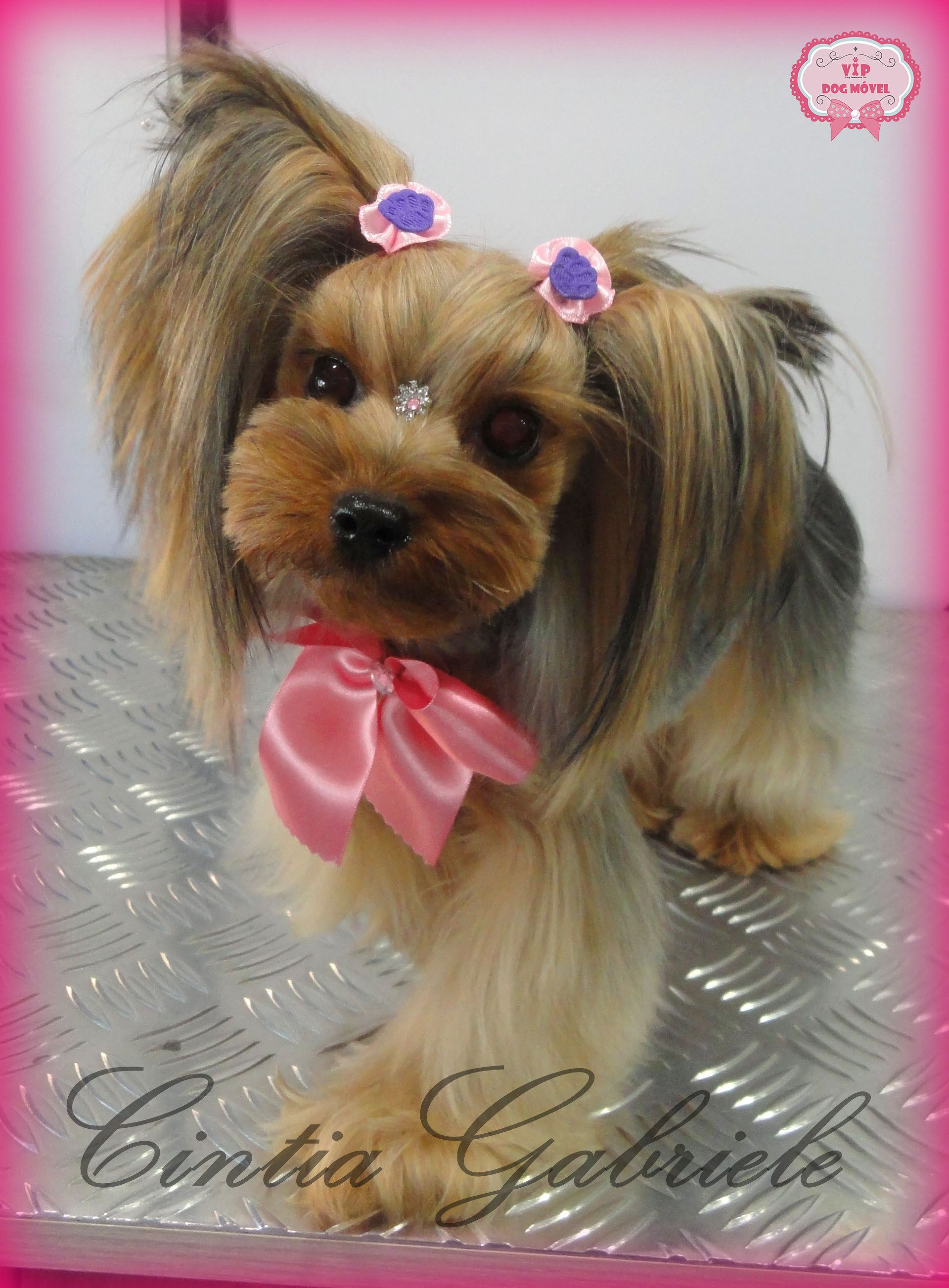 Korean Dog Grooming Style Model Yorkshire Taty Dog Grooming Styles Dog Grooming Tips Asian Dogs
