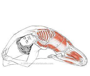 Анатомия йоги  Анатомия йоги Упражнения для йоги Йога