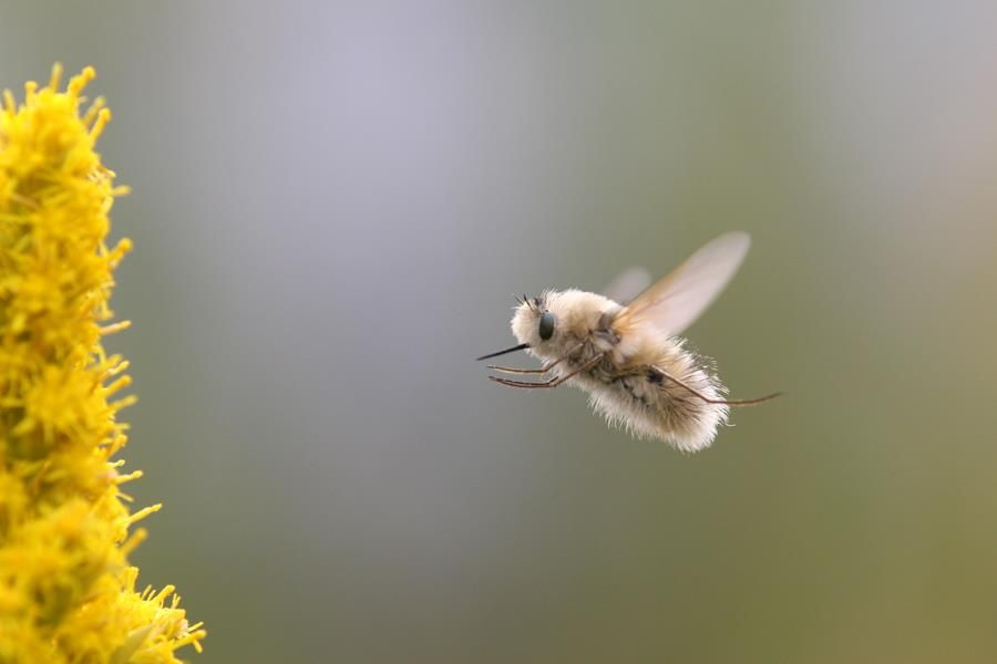 10+ Hummingbee information