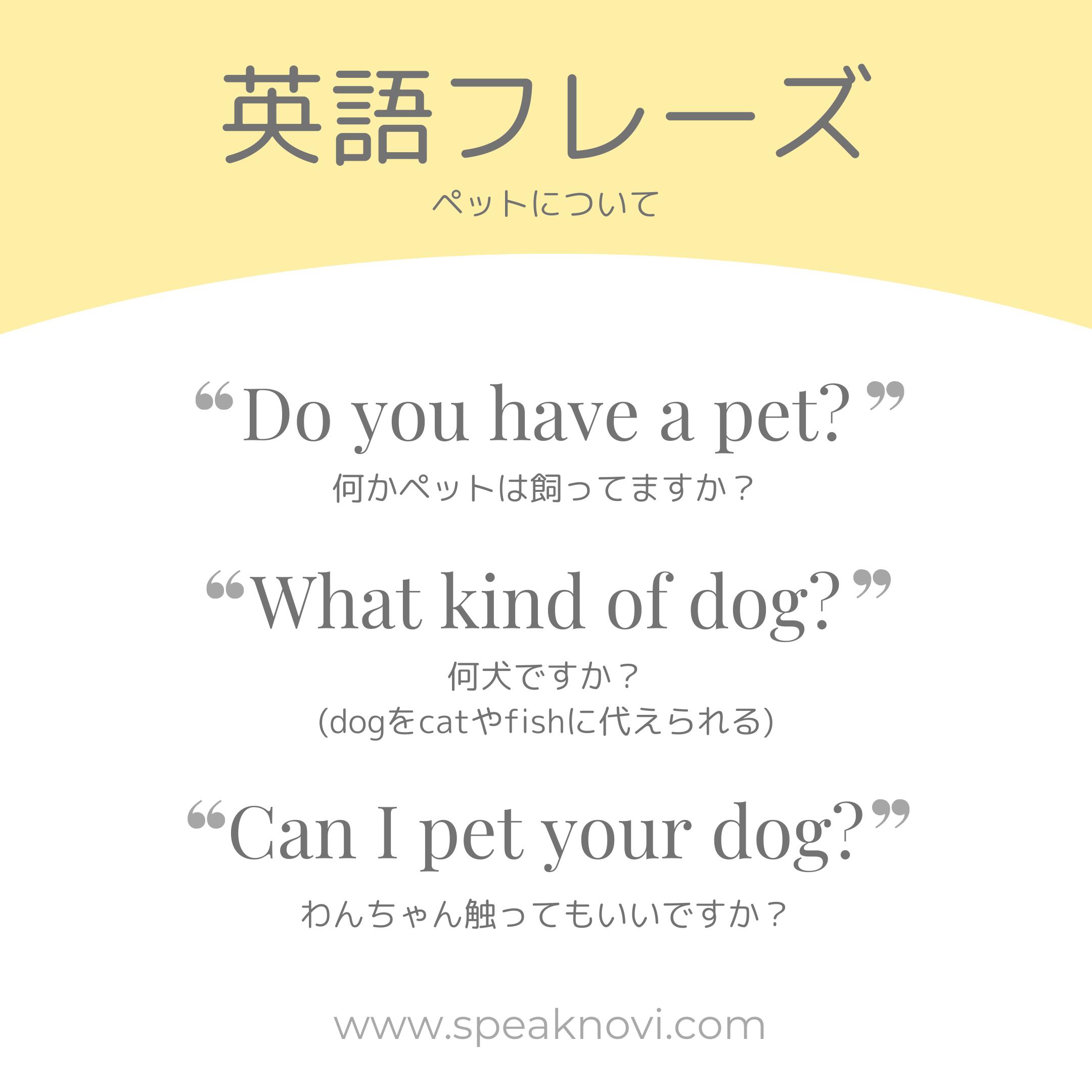 日常英会話で使えるペットに関するフレーズ 英語で気軽に話しかけられるようになろう 学習 英単語 英語 独学