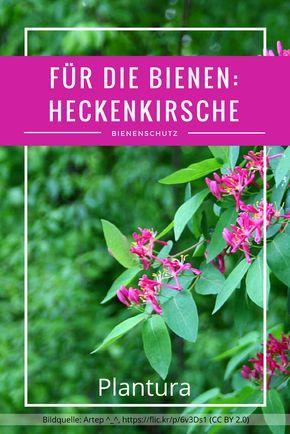 Bienenfreundliche Pflanzen Top 10 Plantura Bienenfreundliche Pflanzen Straucher Pflanzen Pflanzen