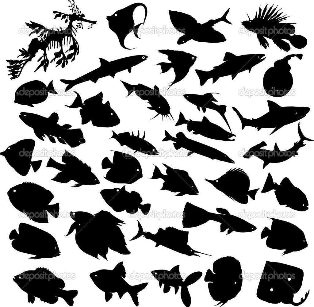 fish silhouette patterns | fish silhouettes stock vector fish free