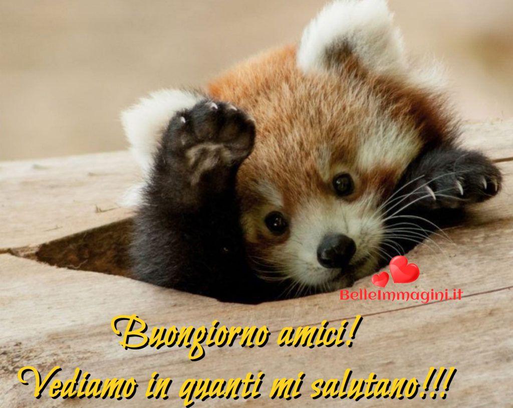 Buongiorno con animali belle immagini whatsapp t for Buongiorno o buon giorno immagini