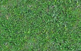 wild grass texture. textures texture seamless | wild green grass texture 20654  - nature elements wild