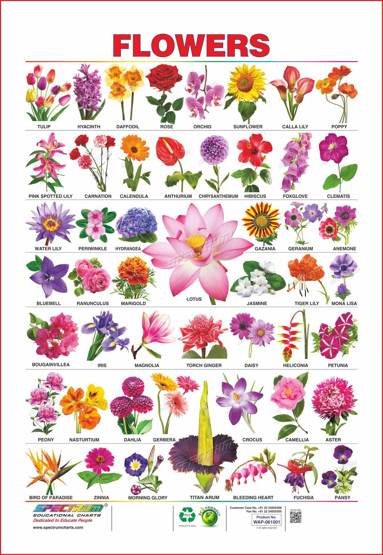 flowers, tulip, hyacinth, daffodil, rose, orchid