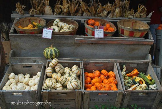 Pumpkin Roadside Display in Fruit Crates filled with Orange White Green Yellow Colors in Autumn Fall at a Barn Yard Farm in Midwest Midwestern Art Gift Photograph Photography