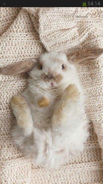 Kaniner med meget lange øre