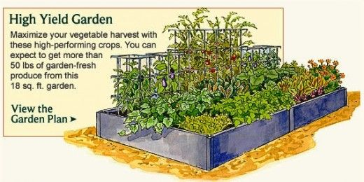Home vegetable garden layout