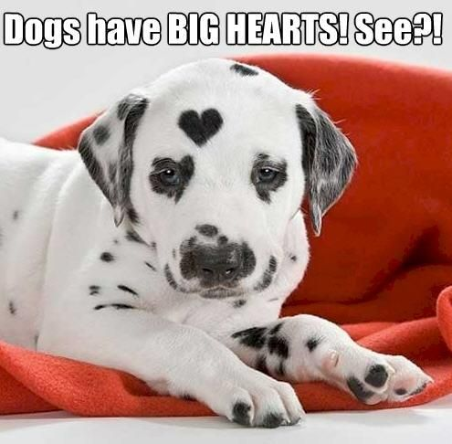 Dogs have big hearts