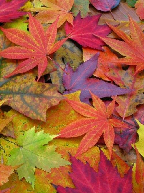 I love the fall colors in Michigan, I love how much dimension the leaves have which I would like to use these colors.