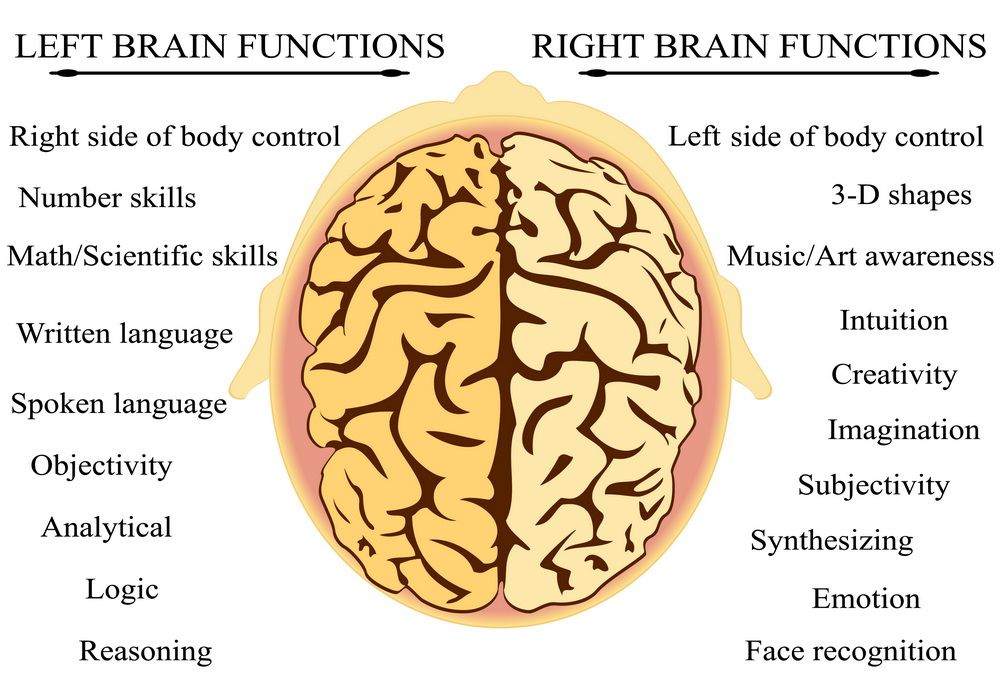 Images of brain function diagram of brain and functionsg ot images of brain function diagram of brain and functionsg ot fun pinterest ccuart Choice Image