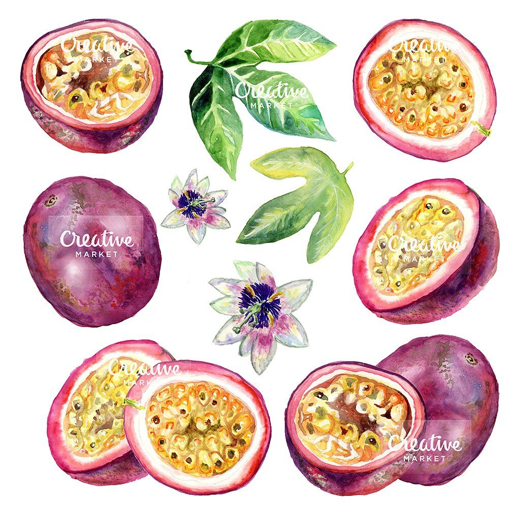 Passion Fruit Watercolor Fruits Drawing Fruit Painting Passion Fruit