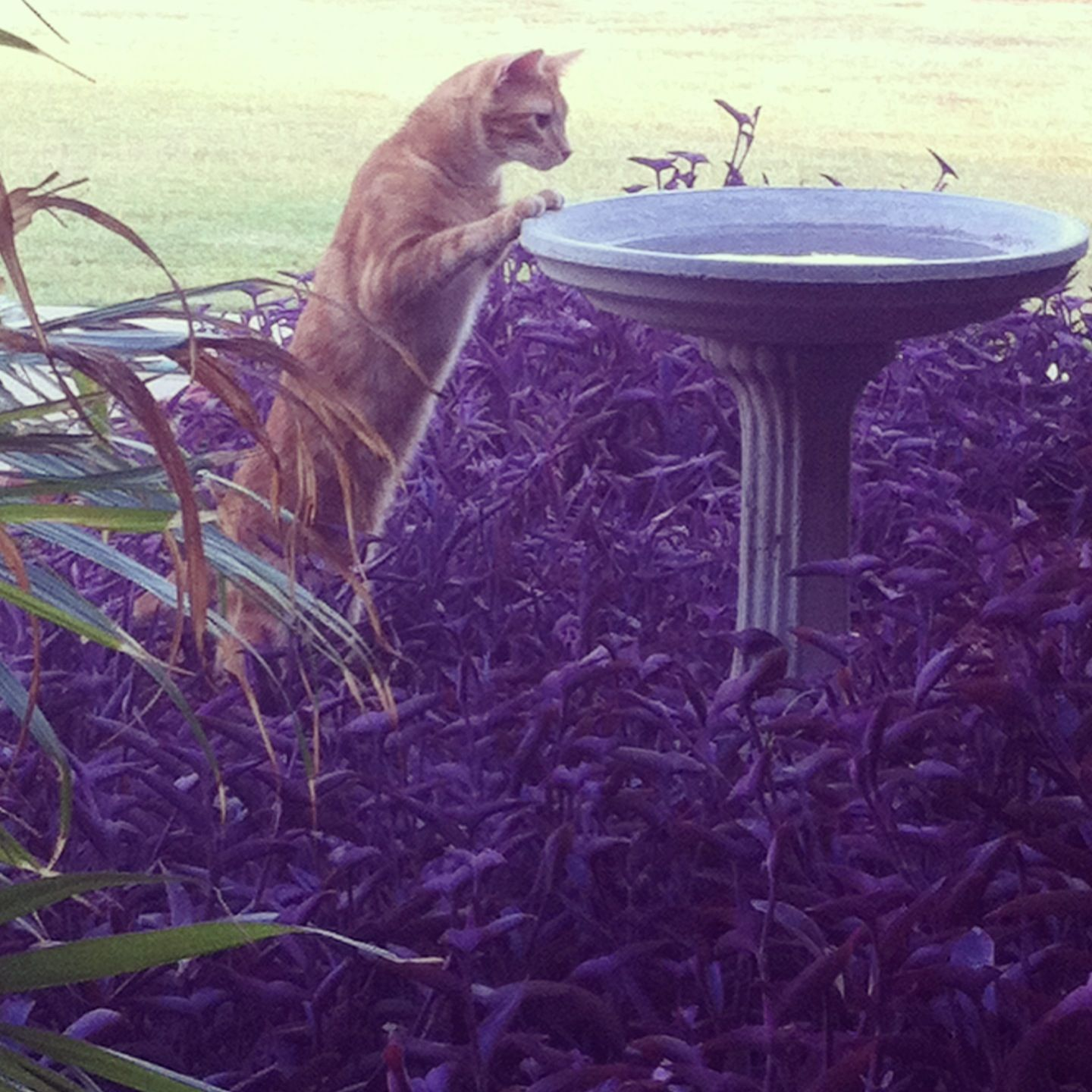 Bird cat? My Graham. A curious fella Bird bath, Bird, Cats