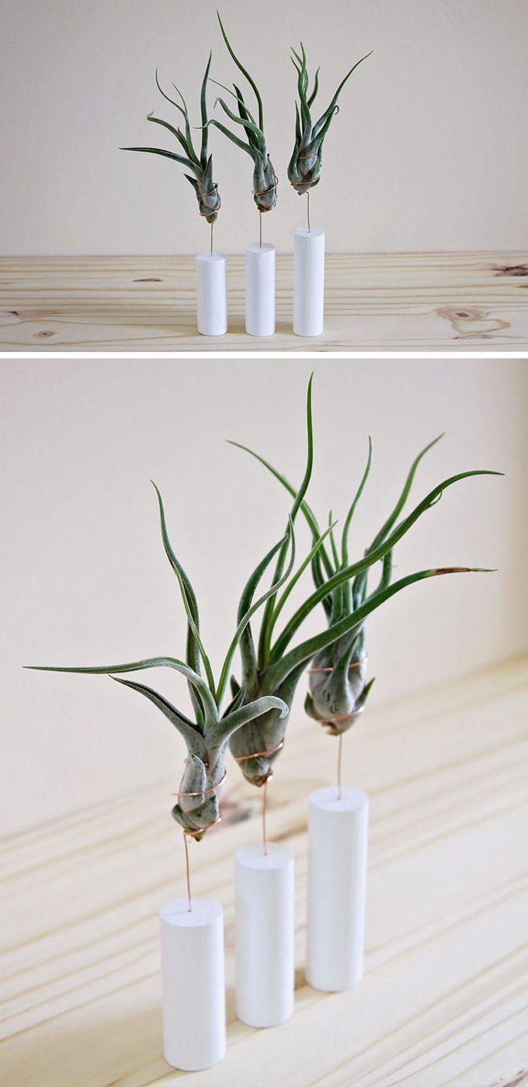 Petit Pot De Fleur Exhiber Ses Plantes Aeriennes Avec Raffinement