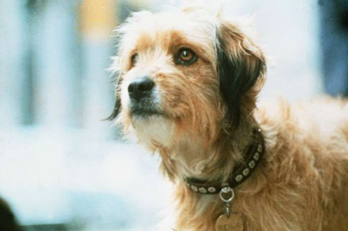 Celebrated Canines Famous Movie Dogs Benji Famous Dogs Dogs