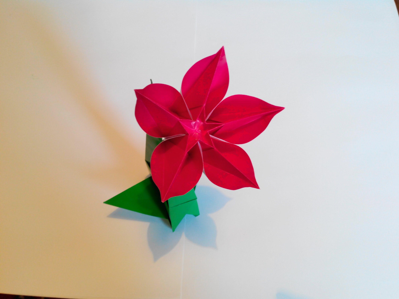 Carambola Flower Origami Carmen Sprung