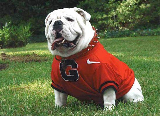 History of UGA the Mascot - University of Georgia Athletics