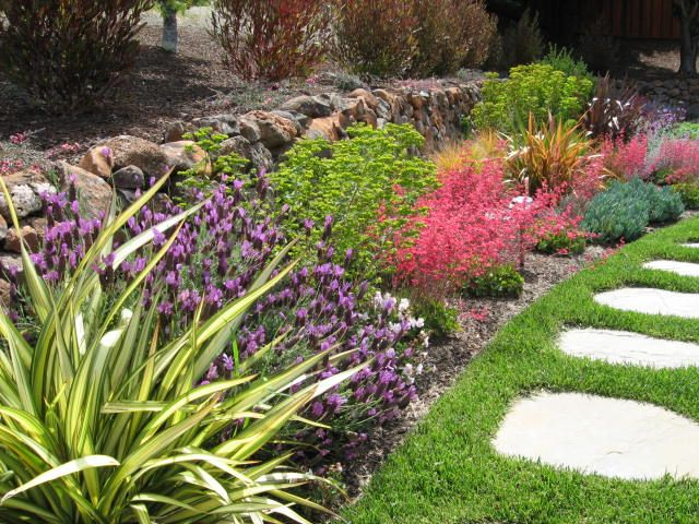 Superb Drought Tolerant Plants For California | ... Planted Away From A Water  Source They