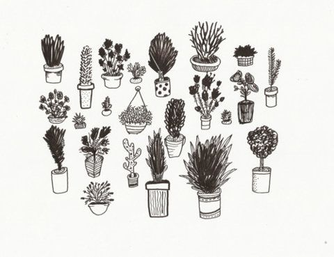 PLANTS IN THE WORLD!
