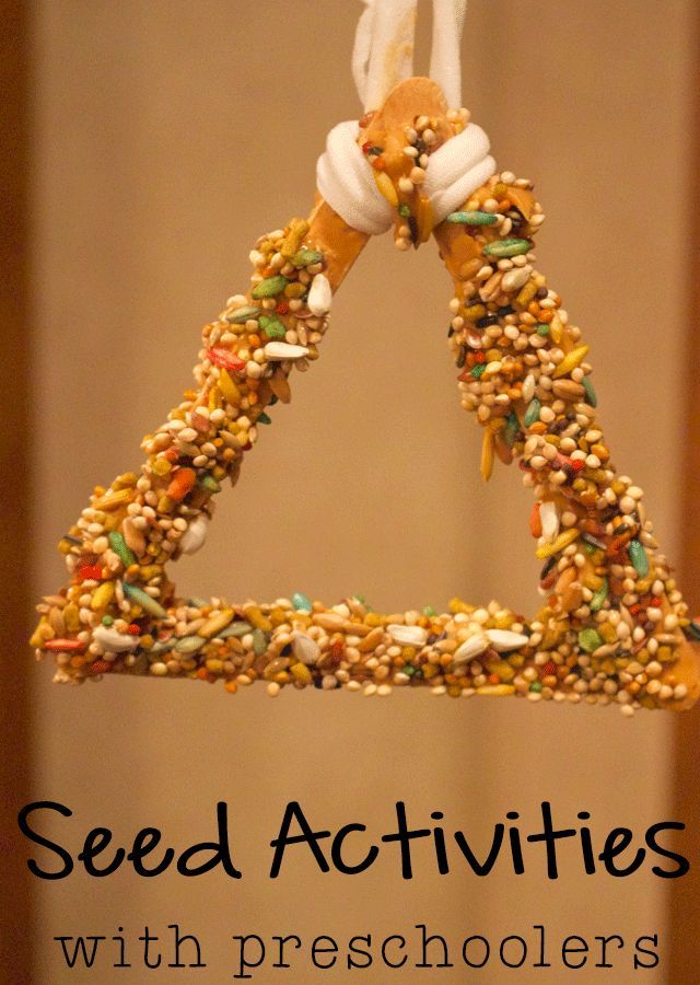 3 Fun Activities with Seeds for Preschoolers