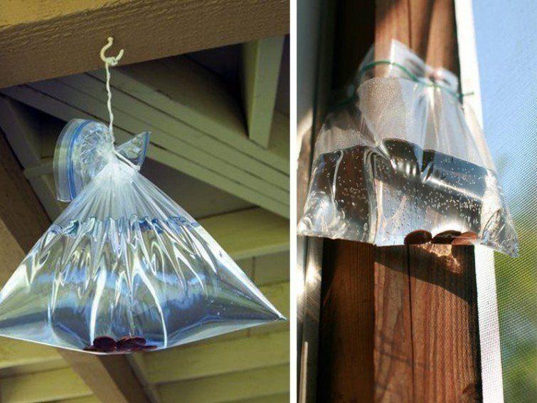 Cómo alejar moscas de tu hogar   REPELENTES DE INSECTOS   Pinterest ...
