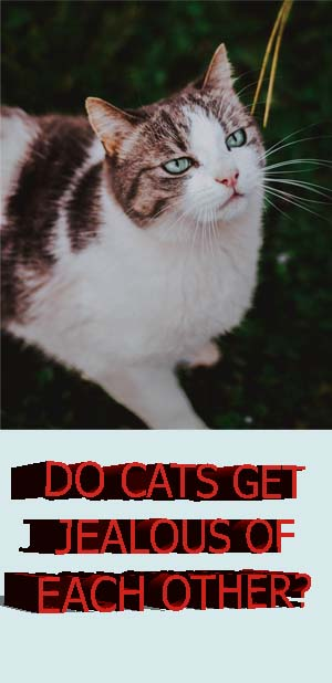 DO CATS GET JEALOUS OF EACH OTHER? Cats, Cat lovers