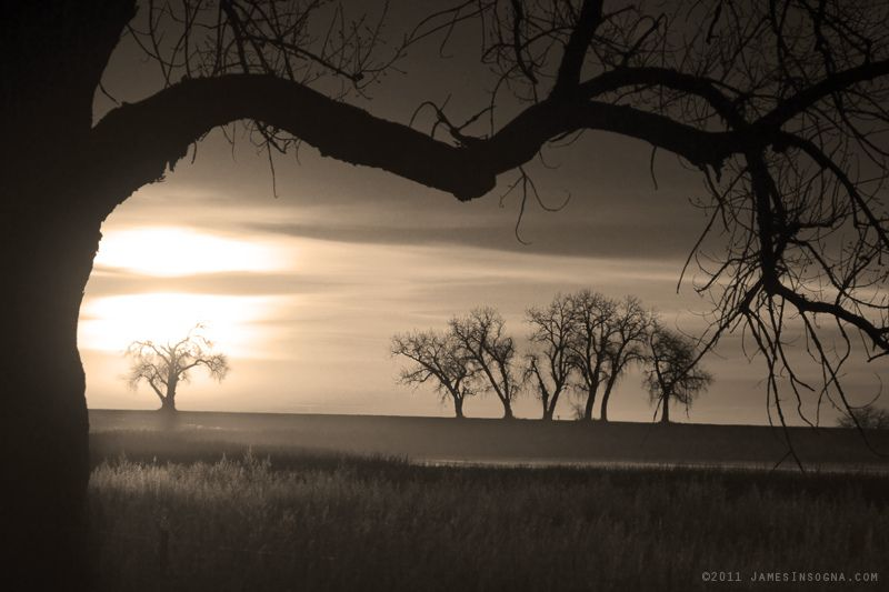 Trees and Meadows Sepia Sunrise