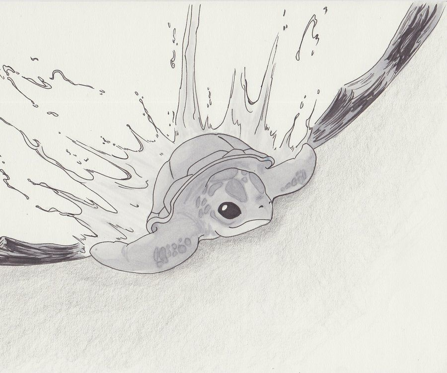 Turtle Line Drawing Tattoo : Baby sea turtle hatching drawings by
