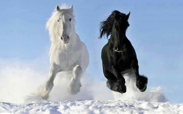 Il bianco e il nero.