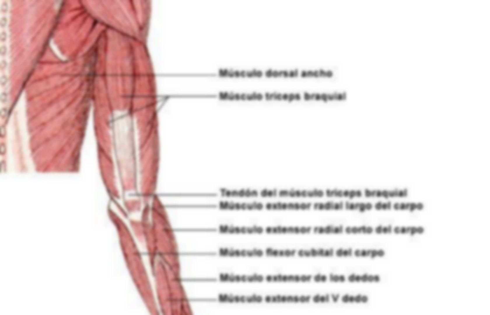 Para estudiar anatomía del miembro superior   Anatomía   Pinterest ...