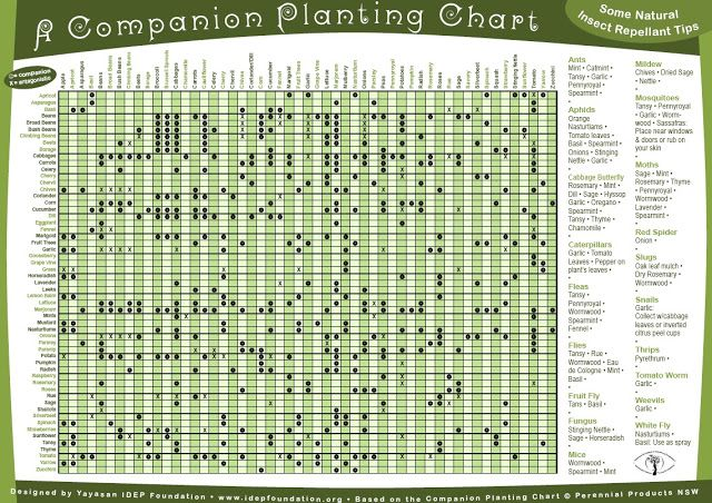 Homegrown On The Hill May 2013 Companion Planting Guide Companion Gardening Companion Planting Chart
