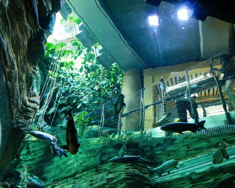 Green Planet Dubai Biodome Dubai Planets