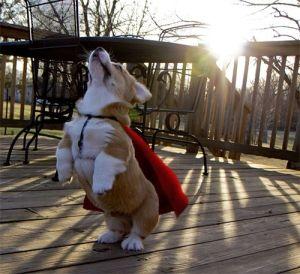 I am gonna fly   #animal #fun #cute