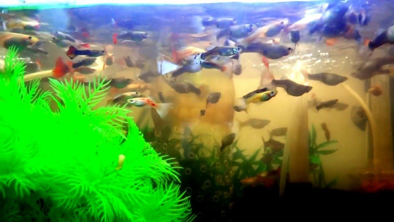 The best way to #fish #tank #howto #make #design #aquarium #FHD ...