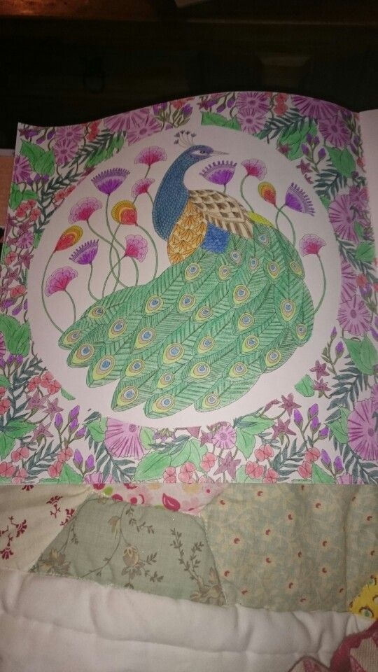 Millie Marotta Animal Kingdom Peacock Ilovetea86