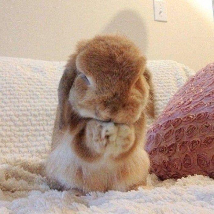 Cute Animal Praying Like