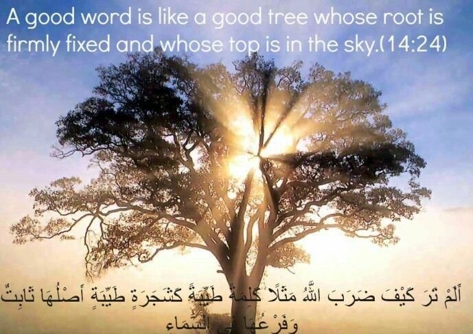 Qs 14 24 A Good Word Is Like A Good Tree Spirituality Abraham Hicks Videos Attract Wealth