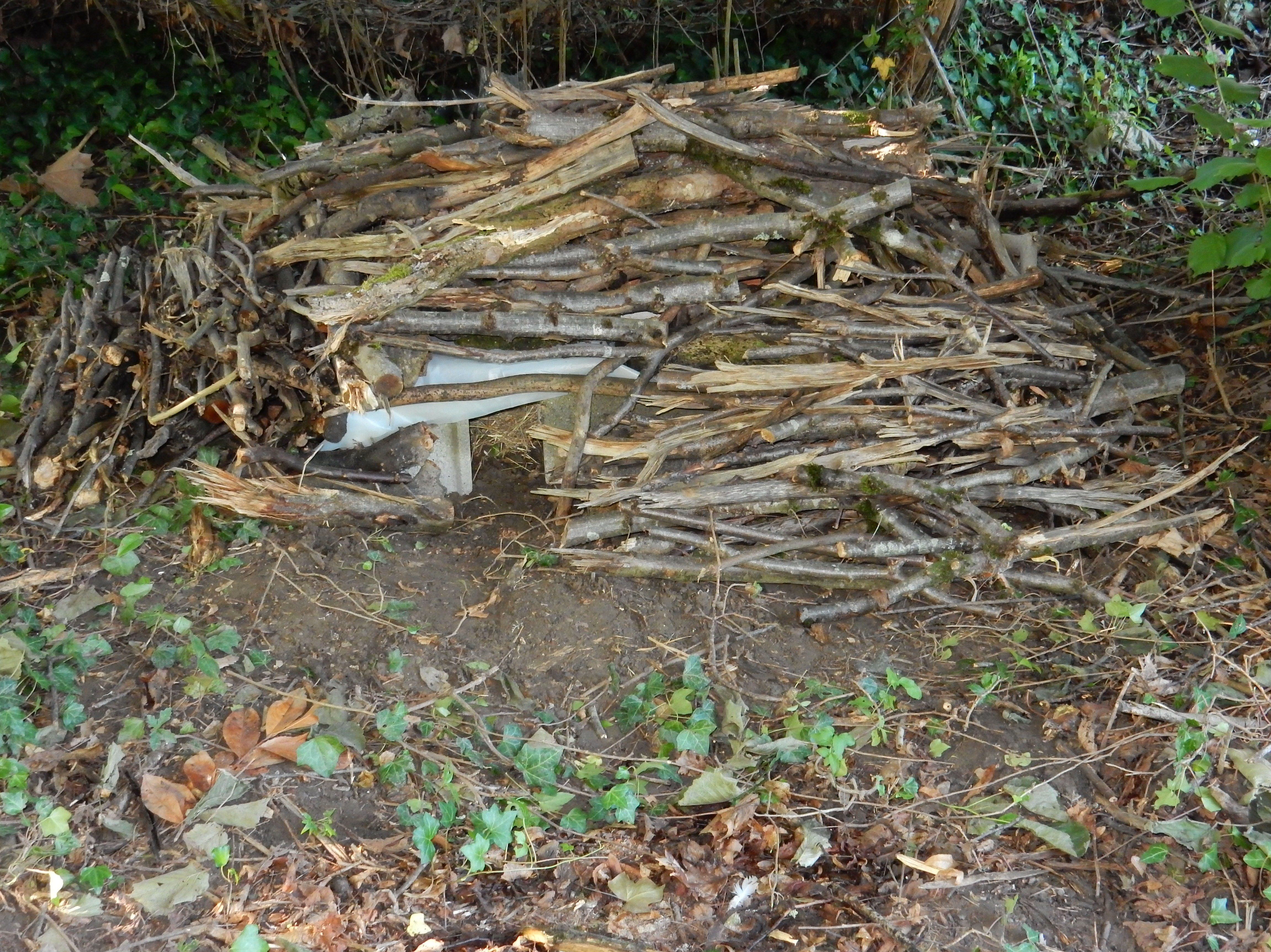 R aliser un abri pour h rissons dans votre jardin avec 5 parpaings une planche un polyane de - Nourrir un herisson dans son jardin ...