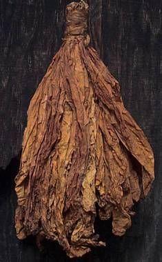 hojas de tabaco secandose , en las tabacaleras de Salta, Argentina