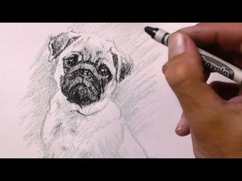 Pug Drawing With A Crayon Youtube Hug A Pug Drawings