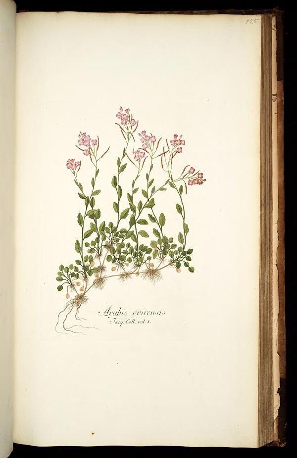 1781 - Icones plantarum rariorum /editae Nicolao Josepho Jacquin