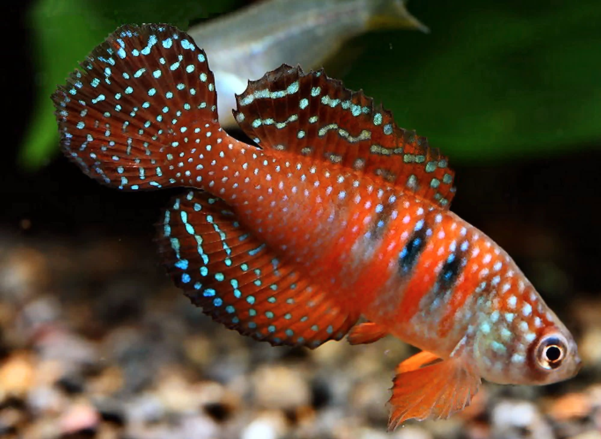 Online Aqurium Shopping Secrets Advice And Tips You Need In 2020 Tropical Fish Aquarium Freshwater Fish Aquarium Fish