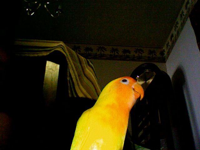 my old bird miss him
