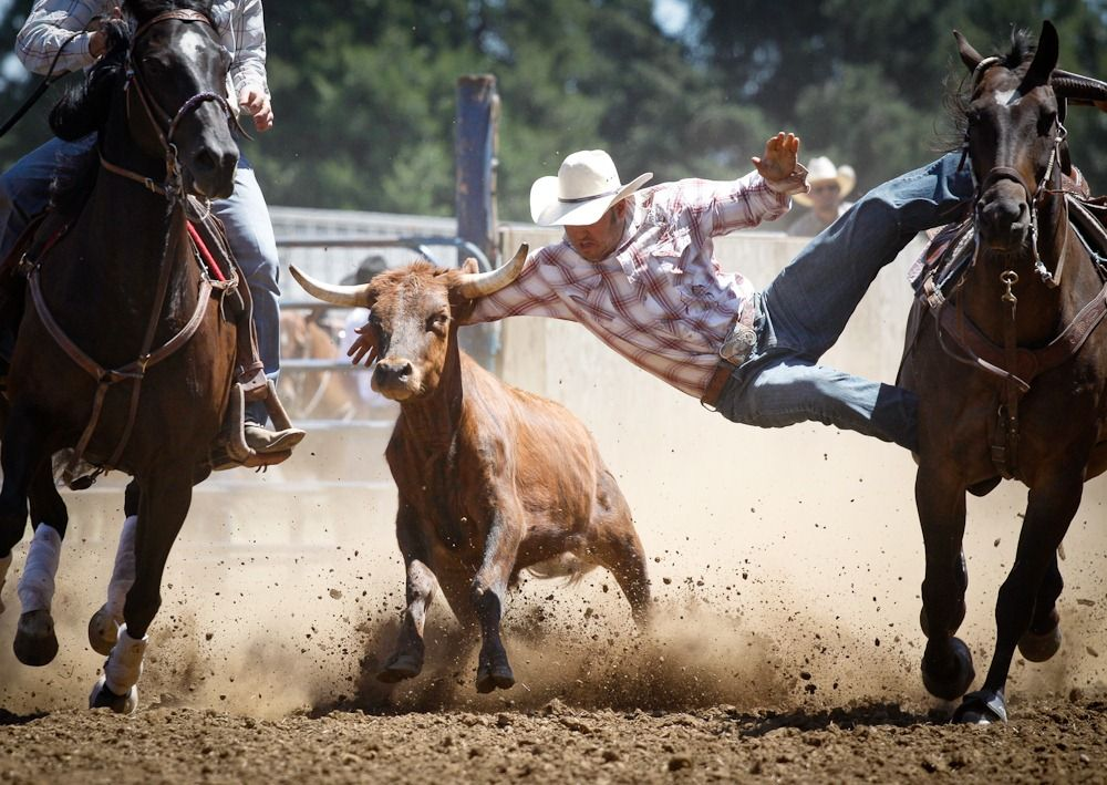 rodeo events steer wrestling